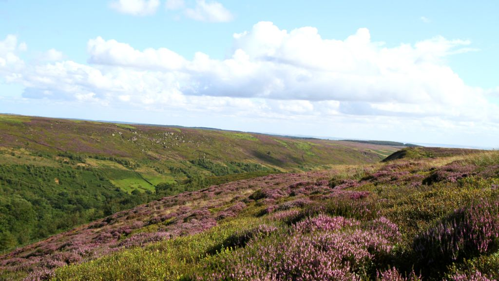 North Yorkshire Moors Landscapes